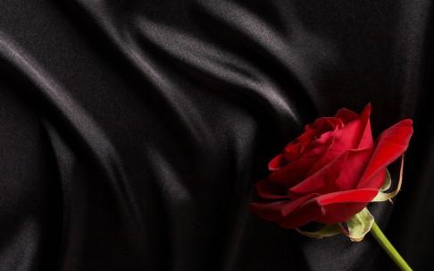tacky rose